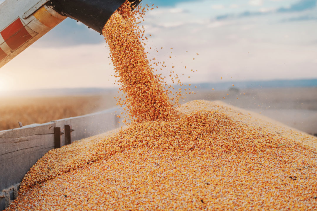 CornSeparator_Lead.jpg