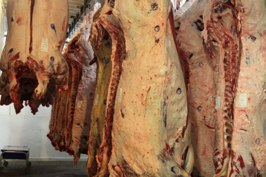 Hanging pork cuts awaiting fabrication