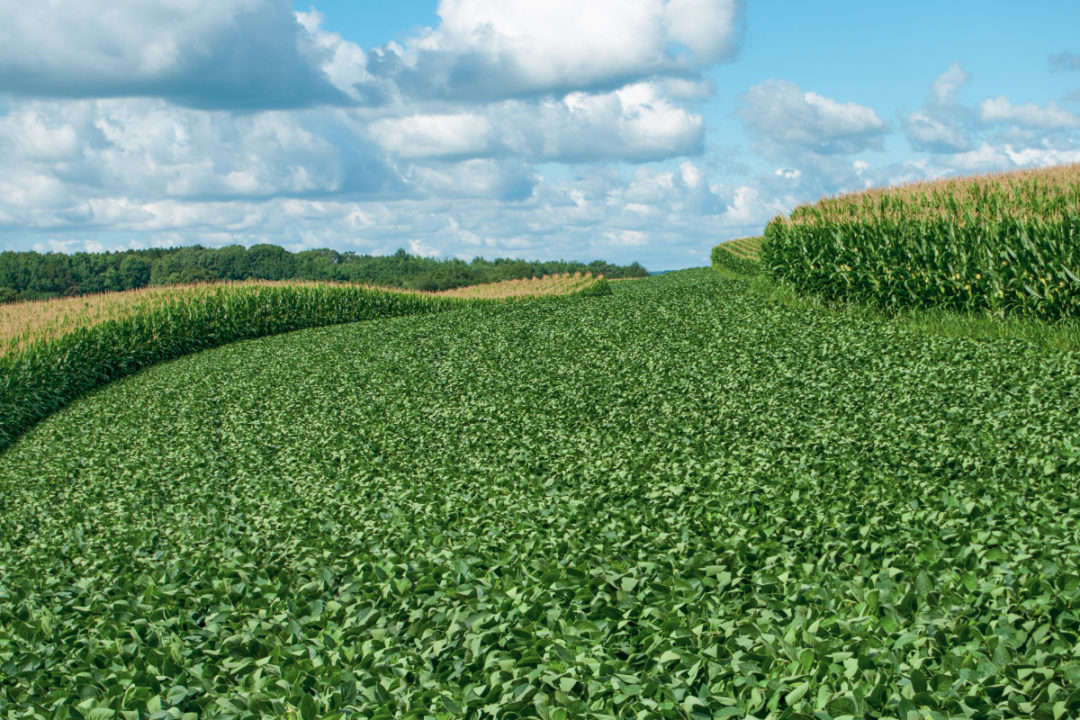CornSoybeanCrops_Lead.jpg