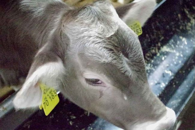 USDA filed a motion to dismiss a lawsuit challenging the agency's plant to implement a livestock traceability program.