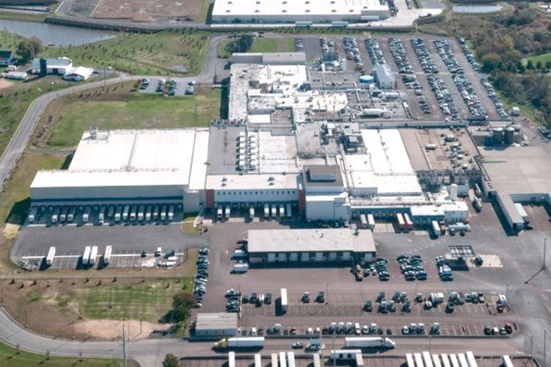 Clemens Hatfield plant