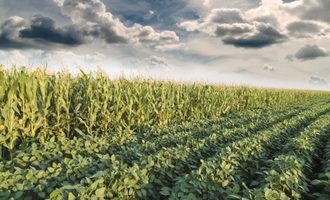 Cornsoybeanfields lead