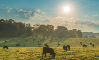 Cattlegrazing lead