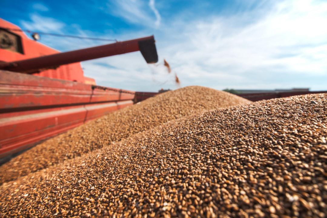 Grain Procedure