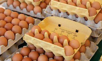 Eggcartons smaller