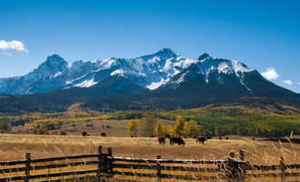 Cattle near mountain smaller