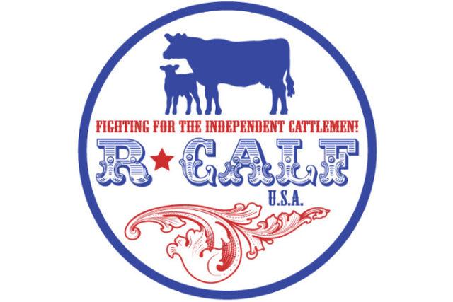 R calf