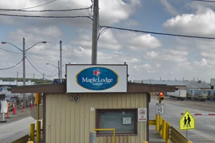 Maple brands