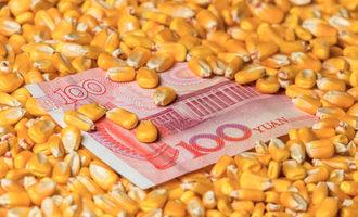 Chinesemoneycorn lead