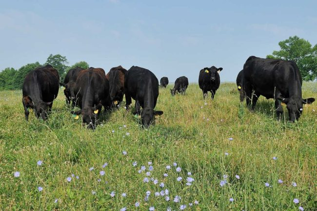 Roseda Black Angus Farms was created in 1996.