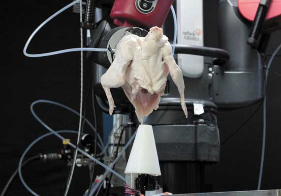 Researchers at GTRI taught a two-armed Baxter robot designed by Rethink Robotics to pick and place chicken front halves on cones for deboning and further processing.