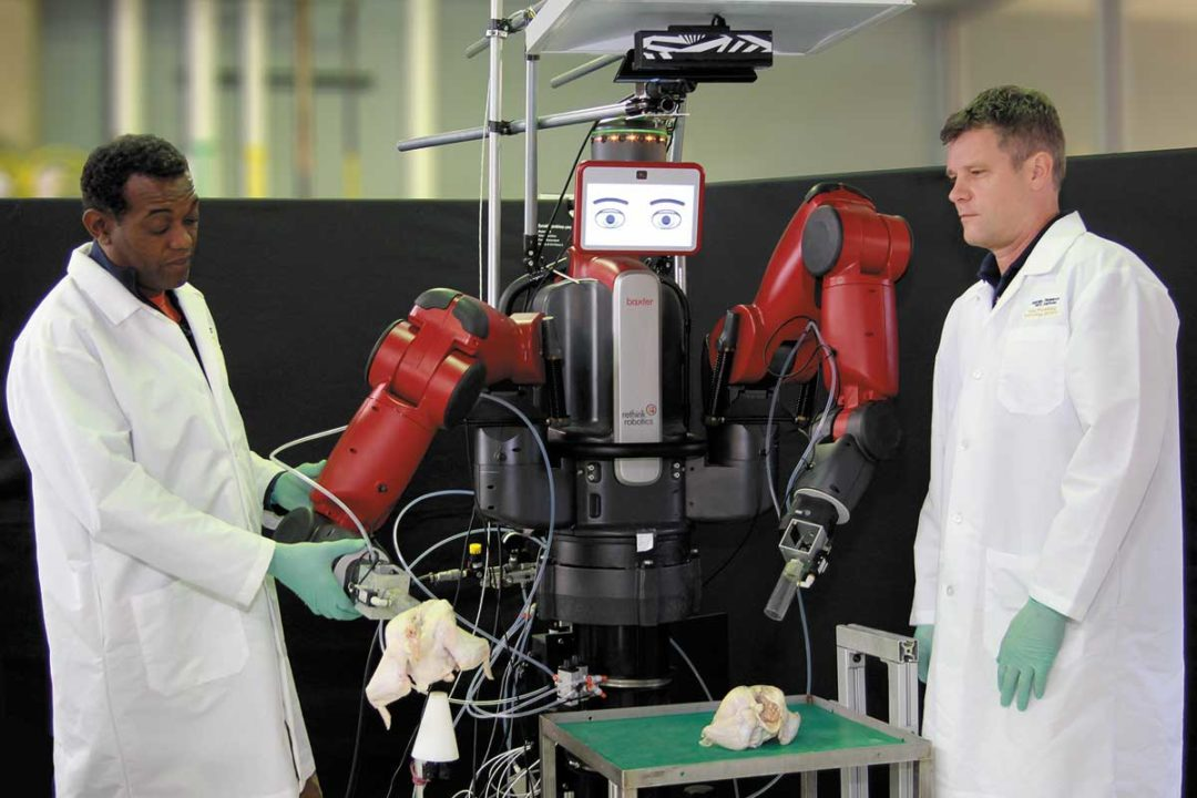 Researchers are exploring co-robotics to assist workers in poultry operations.