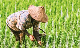 Ricepaddyharvest_lead-small