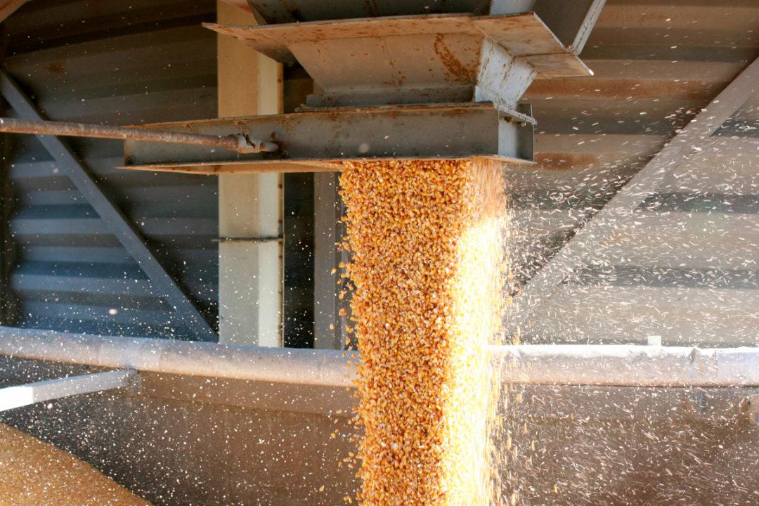 Grain adobestock
