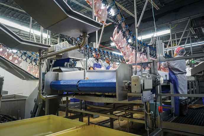 Gerber Poultry Inc. currently uses humane certified electrical stunning in its slaughter process.