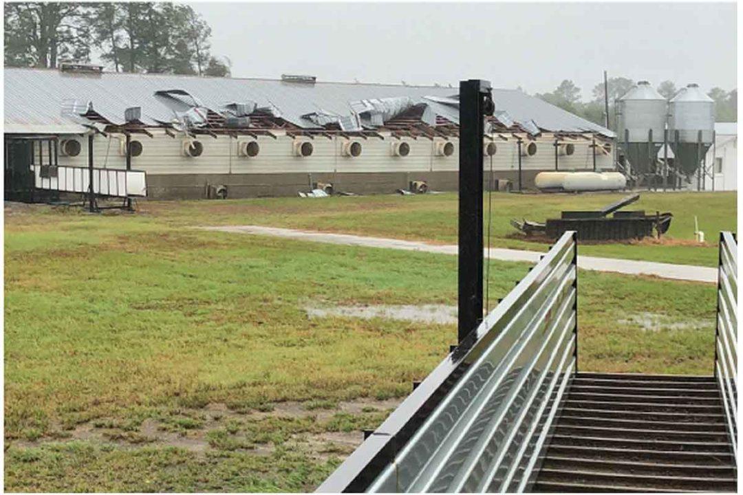 Hog farm in Duplin County, North Carolina