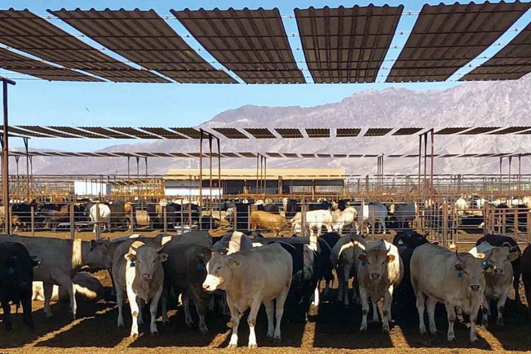 SuKarne maintains about 80,000 cattle on feed at its Mexicali, Mexico-based vertically integrated plant.