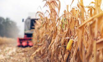 Corn field photo cred adobe stock e