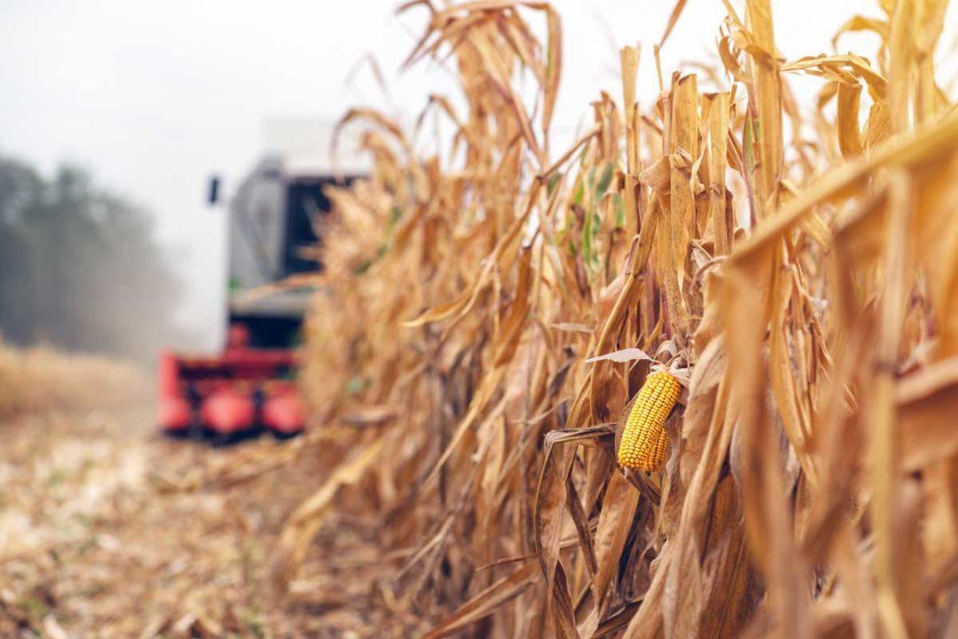 USDA corn
