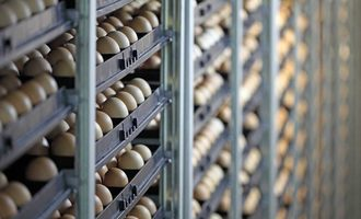 Eggs-in-incubators_adobestock
