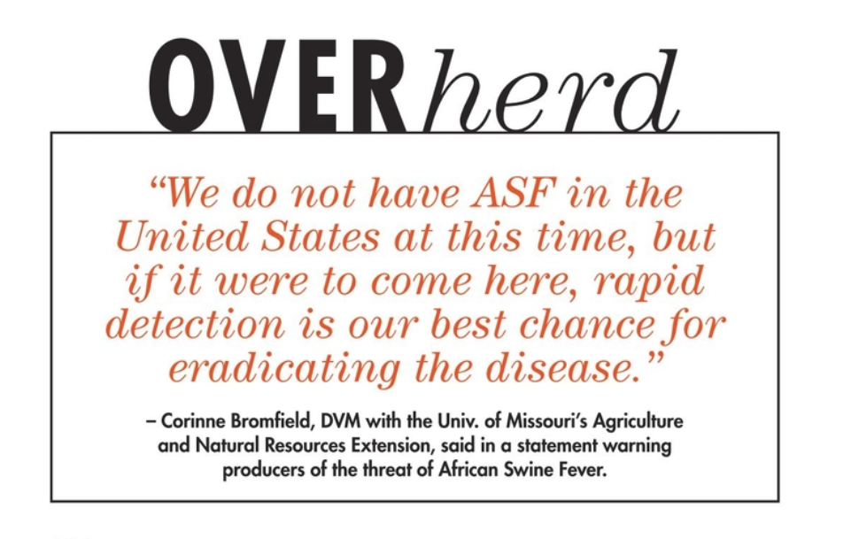 Corinne Bromfield quote warning producers about African Swine Fever.