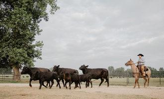 Hippie-cow-beef