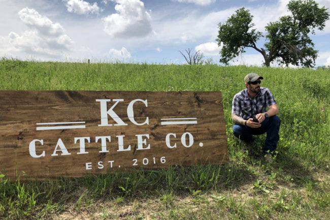 3 KC Cattle