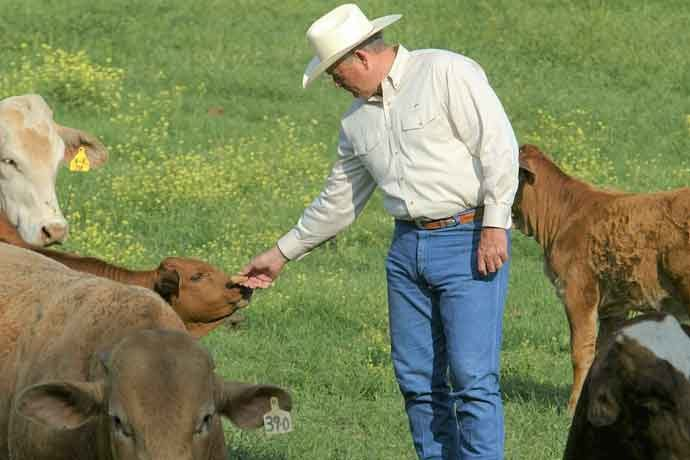 "Nolan Ryan Beef was the first company to participate in the ""Temple Grandin Responsible Cattle Care Program."""
