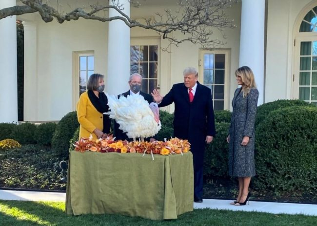 President Trump pardoned 'Corn' and 'Cob' as part of the annual tradition.