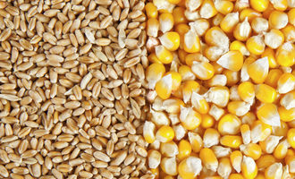 Wheatcorn_lead