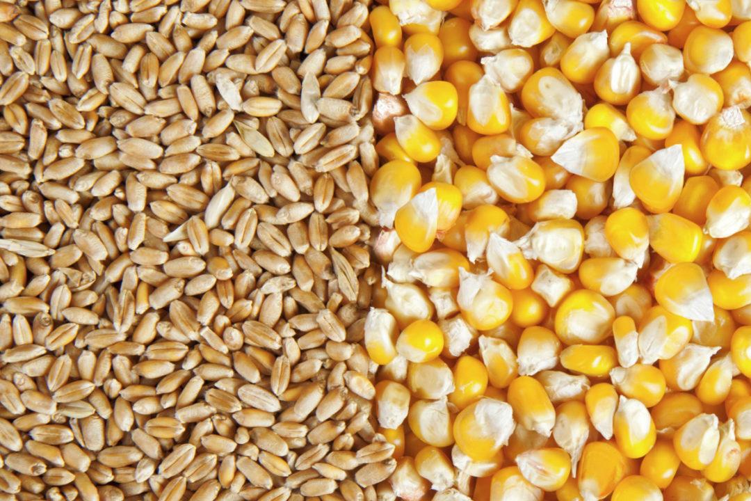 Wheat Corn