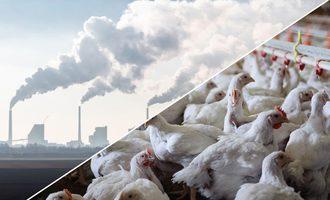 Chickensgreenhousegas_smaller