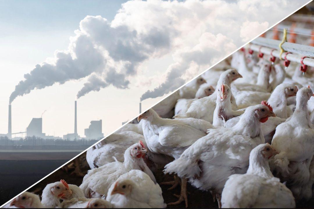 Chicken Greenhouse gas