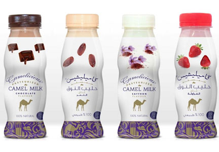 Camel milk is being floated as an alternative to cow's milk