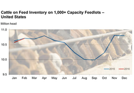 US Dept. of Agriculture cattle on feed for January
