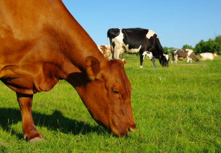 The Univ. of Lethbridge received a grant of $1.1 million from the Canadian government to research ways to reduce methane gas emissions in cattle.
