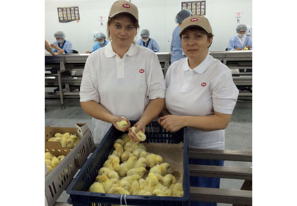 Cobb Russia employees Yulia Pavlova, quality manager Cobb Russia (left); and Irina Khamatshina, technical manager