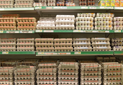 Egg case at a grocery store.