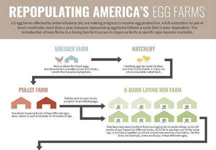 Egg producers are having some success repopulating their flocks.