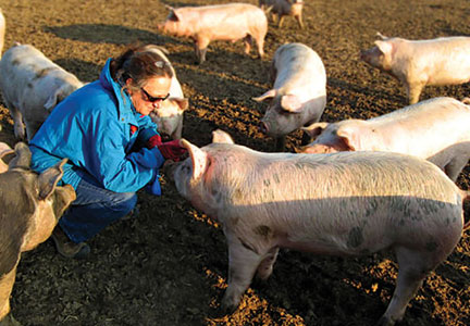 Kathy Eckhouse visits a pig farm. Site visits are routine.