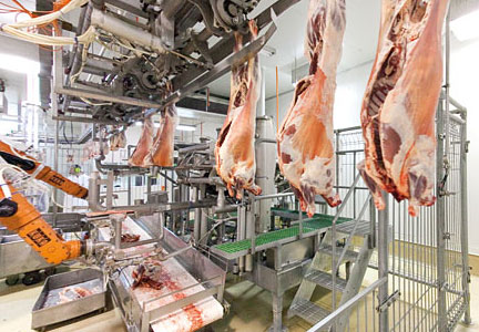 Lamb carcasses entering the primal system where cuts are made with two counter rotating circular blades.